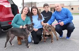 black friday pet adoption zappos black friday pet adoption best friends animal society