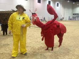 in costumes llamas in costumes album on imgur