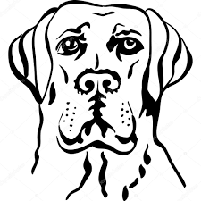 vector sketch dog breed labrador retrievers u2014 stock vector