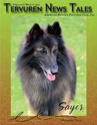 belgian sheepdog 101 current issue tnt ad abtc