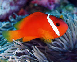 aquarium fish types in india 1000 aquarium ideas