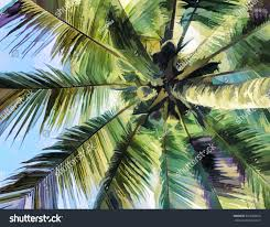 palm tree leaf crone view ground stock illustration 423583834