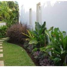 Front Yard Landscaping Ideas Florida Does Anyone Know What Kind Of Palm Or Fern Those Small Clumps Are