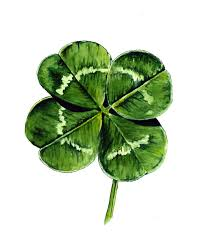 4 leaf clover by suzanne houghton paintings and illustrations