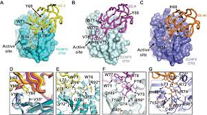 potent and selective inhibition of pathogenic viruses by