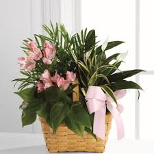 sympathy plants sympathy dish garden sympathy plants ital florist