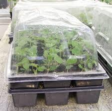 starting seeds indoors yard and garden garden university of