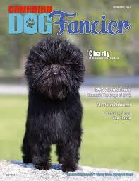 affenpinscher breeders canada september 2013 canadian dog fancier
