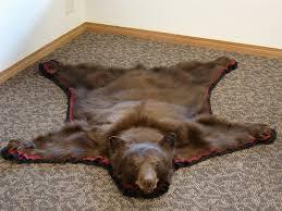 Taxidermy Bear Rug Marvellous Design Bear Skin Rugs With Head Stunning Ideas Real Fur