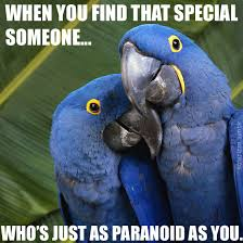 Paranoid Parrot Memes - when you find that special someone who s just as paranoid as you