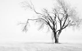 white tree black and white tree wallpaper images wallpapers lobaedesign