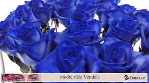 florea cz modré růže blue vendela youtube