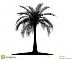 palm tree svg black and white palmtree palm tree stock photo image 11181230
