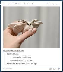 Moth Meme - venezuelan poodle moth tumblr know your meme