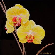 yellow orchids yellow orchids painting by carol sabo