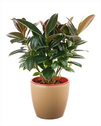 indoor plants images want to keep your house cool without an ac bring these plants in