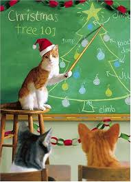 Christmas Cat Memes - christmas cat teaching funny picture funnyexpo