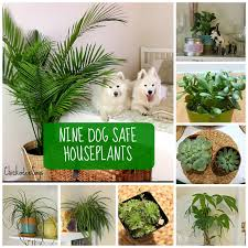 if you want to decorate with houseplants here are 9 dog safe