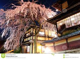 traditional japanese house with sakura tree royalty free stock