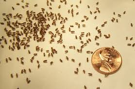 gnats in bathroom realie org