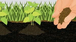 cut the crap making your own environmentally friendly garden