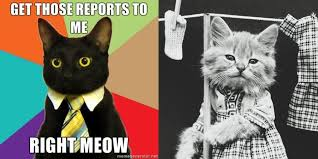 Buisness Cat Meme - america s search for meming the protojournalist npr