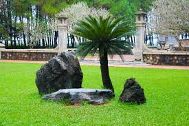 free images landscape tree nature grass plant lawn stone