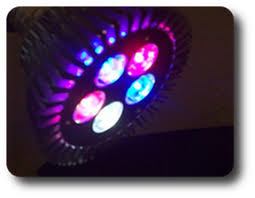 best led refugium light best refugium lighting reef2reef saltwater and reef aquarium forum