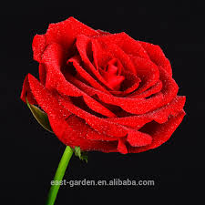 list manufacturers of rose in dome buy rose in dome get discount