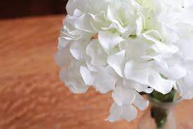 How To Save A Dying Plant How To Save Dying Hydrangeas Hunker