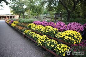 gangwon do provincial flower garden 강원도립화목원 official