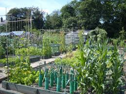 intensive gardening layout your complete guide to maintaining a successful allotment mantis