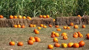 fall pumpkin wallpaper mlewallpapers com pumpkins corn and hay