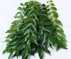 Curry Leaf Plant Diseases - 16 amazing health benefits of curry leaves u2013 home health beauty tips