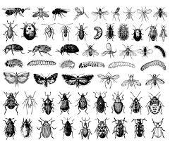 Insectes difficile  Coloriages dInsectes  100 Mandalas Zen