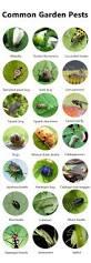 best sure shot organic pest control approaches every gardener