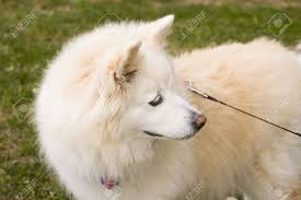 Types Of Dogs Alaskan Breeds Of Dogs Dog Breed And Pets