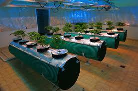 chambre de culture hydroponique comment cultiver du cannabis la faq définitive
