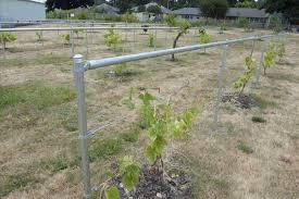 grape trellis jasea win