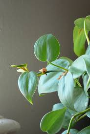 best office plants good plants for the office environment