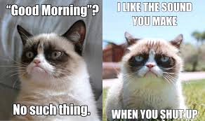 Good Grumpy Cat Meme - 21 grumpy cat memes to instantly make you grumpy however happy you