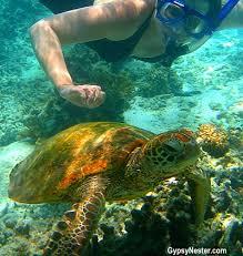 Rhode Island snorkeling images The gypsynesters snorkeling the great barrier reef bucket list jpg