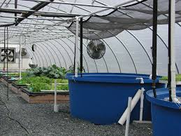 fish farms continued aquaponics system farming and aquaponics