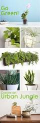 best 20 indoor window boxes ideas on pinterest indoor herbs