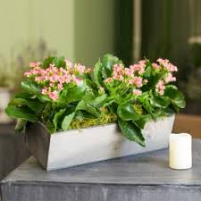 san diego flower delivery plants flower delivery in san diego timeless blossoms