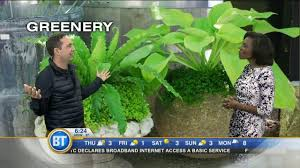 Frankie Flowers - frankie flowers previews the top gardening trends for 2017
