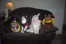 Halloween Costume Cats Halloween Costume Cat Kittentoob