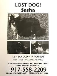 5 year old australian shepherd west side rag australian shepherd named sasha runs away during