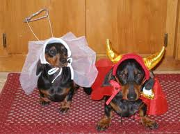 Halloween Costumes Wiener Dogs Cute Pair Dachshunds Halloween Doxie Love