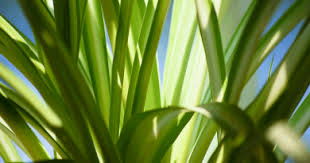 Green Plants Benefits Of Houseplants In From The Garden